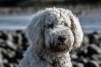 dog-1708067_1280